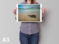 Seaweed A3 horizontal